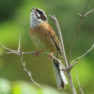 デジタル写真集で野鳥が蘇る!  『月刊ひとり野鳥の会』5月GW特別号