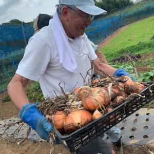 新タマネギとラッキョウが豊作  「農業クラブ」が収穫祭