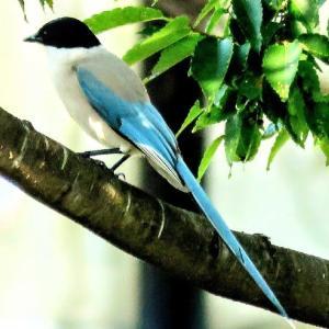 やっと6月の野鳥が   『月刊ひとり野鳥の会』6月前半号