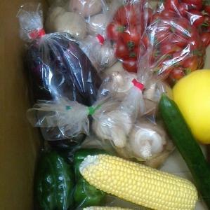 本日の野菜セット6月25日