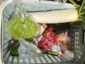 本日の野菜セット6月6日