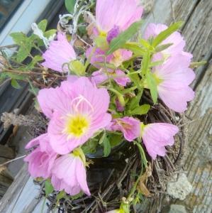 本日の花たち