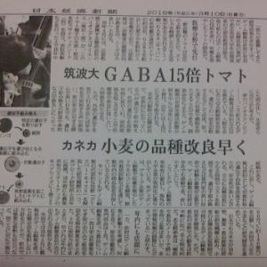 GABA15倍のゲノム編集トマト