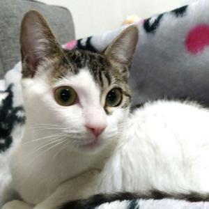 生きてて良かった!!保護猫シロちゃんの成長。