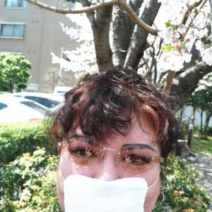 桜舞う大学病院・血液内科、精神医療センター通院。
