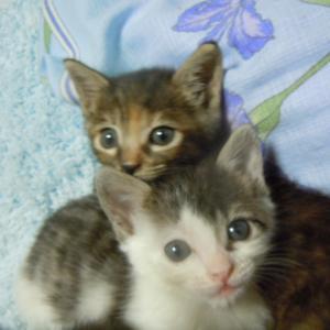 最期まで見つめ合った愛猫の死と葬儀。病人ママでごめんね、トラちゃん。