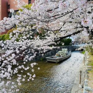 京都夢時間 〜  一之舟入りの桜