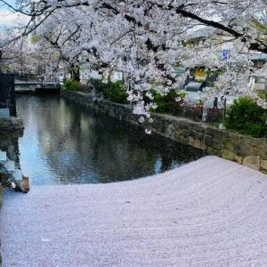 京都夢時間 ~ 高瀬川の花筏