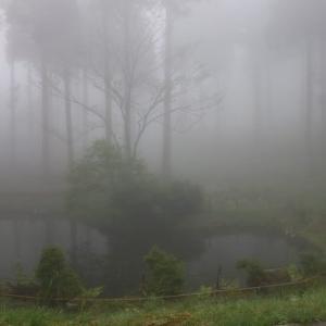 一日霧雨。