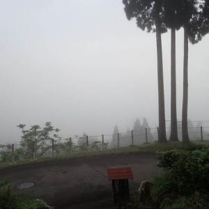 霧晴れてヤモリ参上。