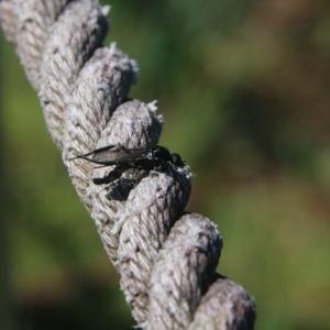 羽蟻飛ぶ。