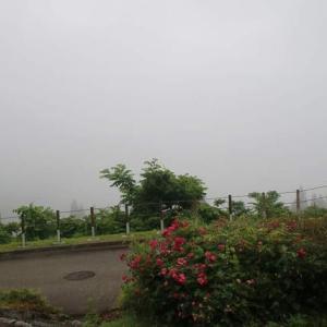 濃霧で開けた東山いこいの森。