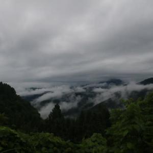 今日も霧の中。