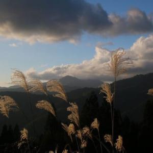 旧暦9月10日、ススキの穂が風に靡いて飛び始める。