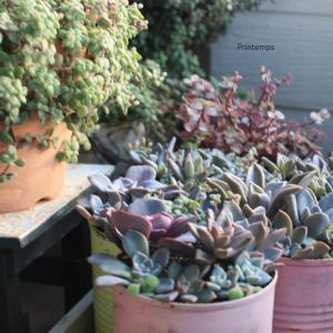 南側の多肉植物の寄せ植え記録。