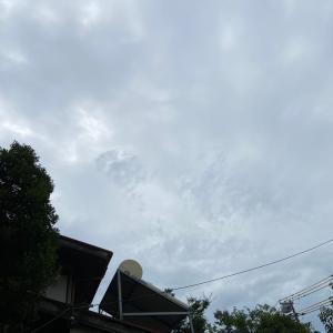 7月23日(木)外のメダカ達