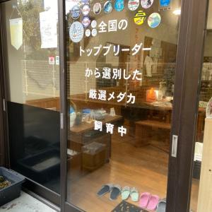 11月21日(土)MIXメダカ