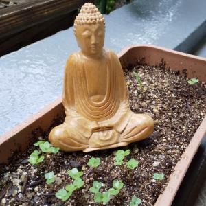 はじめての瞑想