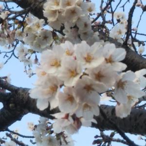 3月29日(日)の結果:今日はマリモの日