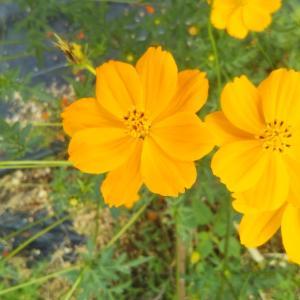 9月19日(日)の結果:季節の変わり目を感じる植物