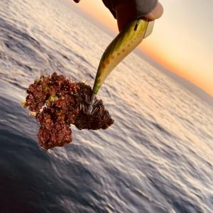 キロアップを釣る人と心の大声