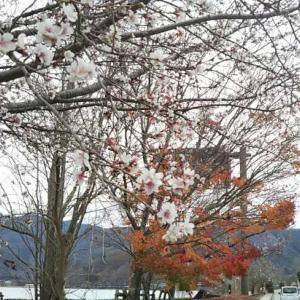 紅葉と桜♪日本の石炭火力発電所はクリーン!
