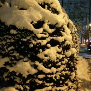 冬がきた!