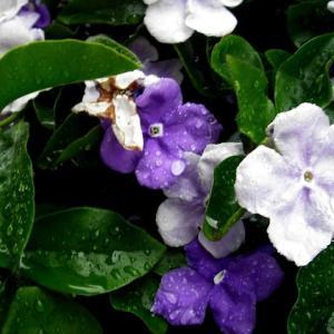 恵みの雨のお陰で草花が元気になりました
