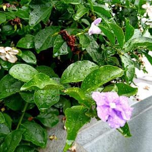熊本含む九州北部が梅雨入り
