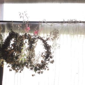 我が家で育った花でリースを作る②