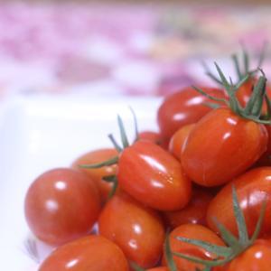 写真を撮る時の食べ物と植物との色