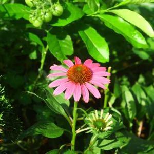 夏の暑さを超えて咲き出した我が家のお花たち🌼💐🌸