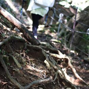 高尾山へ行くのと同じ感じで丹沢大山へ行った