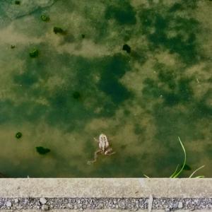 見かけないカエルを見つけて🐸