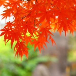 紅葉を近くの公園で撮って来た〜