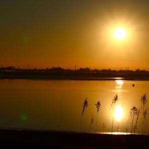 渡良瀬遊水池①
