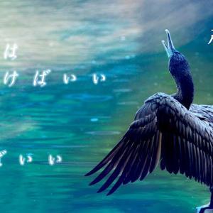 鳥さん達をピックアップ✨🕊