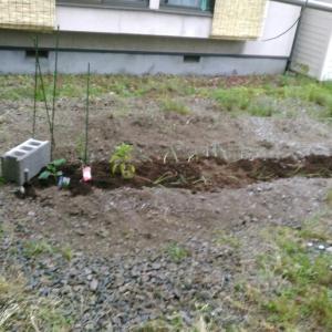 アブの季節は家庭菜園!