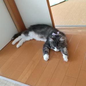 暑かったね(((^_^;)