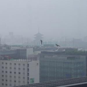 京都帰ル。「東海道新幹線」で東京へ。