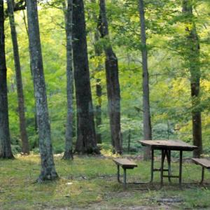 山林探しはガチャ要素あり。山林でも隣の土地は所有者がいる