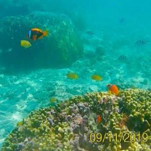 【宮古島/吉野海岸】こんな浅瀬に引くほど魚が!幼児も初心者も驚くほど簡単にシュノーケル可能な絶景ビーチ!