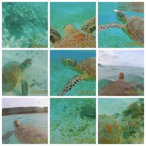 【石垣&宮古】ウミガメに会えるビーチ、私が発見したのはこの3ヶ所!出会えるポイントも大分析!