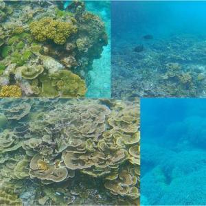 【宮古島】中の島海岸(下地島)はやはりヤバかった!この珊瑚がビーチから見られるとは!