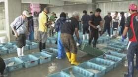 nhk news web 2月22日04:39分、福島県沖 魚介類で唯一出荷制限「コモンカスベ」来週にも解除
