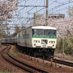 桜と踊り子
