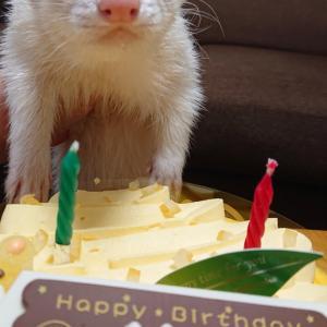 happybirthday(ФωФ)
