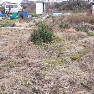 【おすすめ】休日農業のすすめ 不耕作地を開墾するプロジェクト
