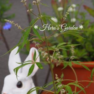 お庭のかわいいお客さま