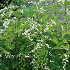 プリペッド&スモークツリーのお花